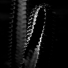 red_trillium: black and white of a cactus with dramatic lighting (cactus light)