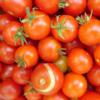 florence_craye: (tomatoes mmm)