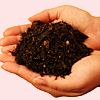 amyfortuna: (Hands holding soil)