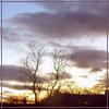 teylaminh: (Photo - Sunset tree)