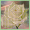 teylaminh: (Photo- rose)