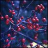 teylaminh: (Christmas - berries)