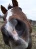 spirithorse21: (Dash: The Look)