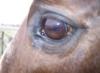 spirithorse21: (Dash eye)