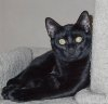 xochiquetzl: Apollo Kitty (Apollo)