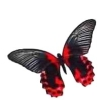 beccaelizabeth: very goth red and black butterfly (butterfly)