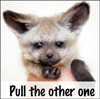branchandroot: unimpressed fox kit holding out a paw (pull the other one)