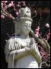 altars_and_shrines: (Kwan Yin)
