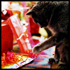 holiday_wishes: Kitty (Holiday wishes)