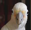 featheredfiend: (FeatheredFiend)