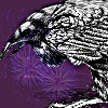 crazedinsaneone: (Default, Nevermore, Purple, Raven)