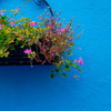 susanreads: a basket of flowers hanging on a wall (flowers)