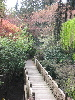 ext_4366: Crystal Springs Rhododendron Garden (spring)