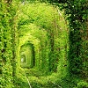 keiji_miashin: Train Tunnel in Kleven, Ukraine (Tunnel of Love)