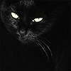 distractionary: high-contrast black cat on black background (it's in my blood or something)