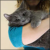 distractionary: unhappy grey cat in woman's arms. (today is not my night.)