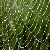 rhi: a cobweb covered with dew and one drop up at the top (web)