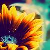 stewardess: (flower sunflower)