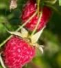 raspberryhunter: (Default)
