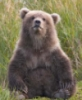 opakele: (Bear Cub Bill Hilton)