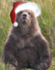 opakele: (Bear Cub Bill Hilton Christmas)