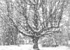 opakele: (Pen and Ink Tree in Snow)