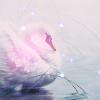 ithiel: (☆ cygne)