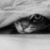 mysticalchild_isis: (stock: cat)