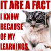 fierysea: I know it because of my learnings (learning cat)