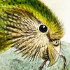 kakapow: (Kakapow (Illustrated))