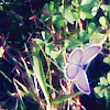 ashes_and_ghosts: (Butterfly-Grace's butterfly)