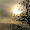 kyriacarlisle: melancholy: leafless tree & sun through grey clouds (tree)
