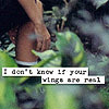 thelinesoflearning: ([ASW] if your wings are real)