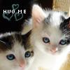 bananacosmicgirl: My foster kittens :) (Cats: hug me)
