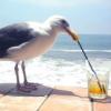 porcupine_advocate: (bird, drink, sip sip, tea)