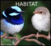 halifaxearthtech: Photo of fairy wrens taken by Bengamint444 from Wikimedia Commons (Habitat)