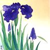 trillingstar: my favorite flower (gen irises)