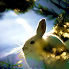 crow_moon: (hare)