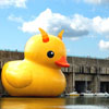 thethingwithfeathers: An actual giant rubber duck; by Dutch artist Florentin Hofman. Now with troll horns. (Default)