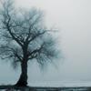 v_greyson: (grey tree)
