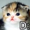 fwee: (Fwee Kat)