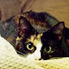 arionhunter: (Cat - Expectant)