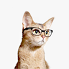 queer_theory: (MISC stock kitty glasses)