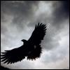 shadows_own: A bird flying in the sky (Bird in the Sky)