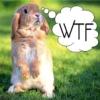 sarehkert: WTF Bunny (WTF)