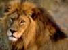 lionsassy: (Default)