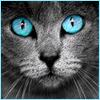 catness: (catblueeyes)