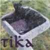 tikatu: my cat and namesake, Tika (birdbath)