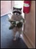 littlemsmack: (Did You Lose A Cat?)