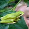harena: (Treefrog and B)